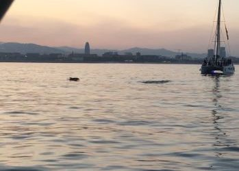 Dolphin watching in Barcelona at sunset