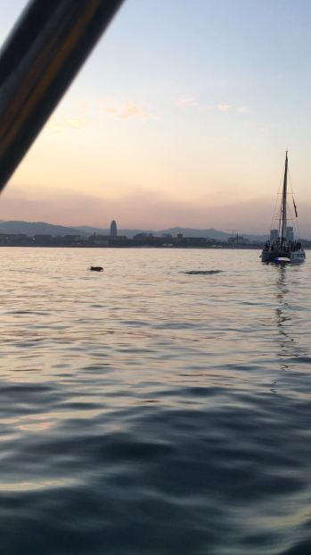 🐬Dolphin watching in Barcelona at sunset