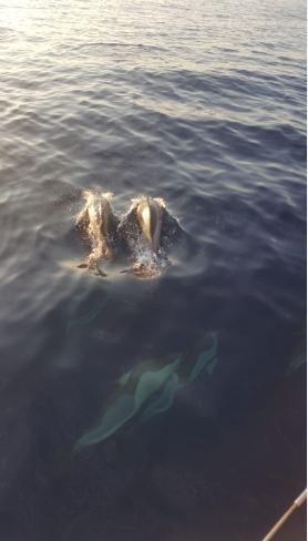 delfines barcelona